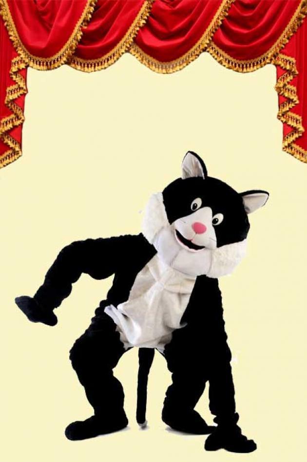 Kostuum Kat